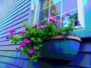 windowbox sept 2013