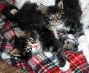 kitties2tigers
